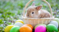 A reminder that school will be closed on Good Friday, April 2nd and on Easter Monday, April 5th. On behalf of the Buckingham staff, Happy Easter to all our students […]